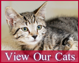 Homepage-Gallery-Cats