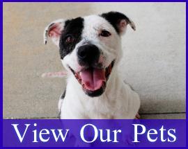 Homepage-Gallery-Pets