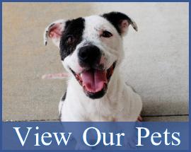 Homepage-Gallery-Pets2