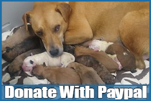 donaye-with-paypal